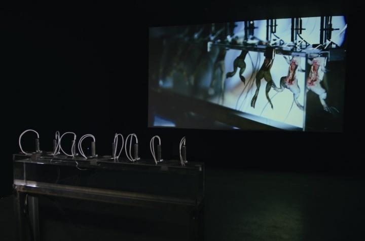 陆扬 《复活!僵尸青蛙水下芭蕾》 蜂巢当代艺术中心