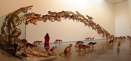 """2006年,亮相德国古根汉美术馆的""""撞墙"""":99匹仿真狼撞向一面玻璃墙的场面"""