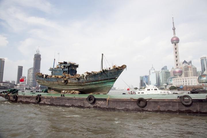 7月17日16时30分,99只仿真动物全都奄奄一息地瘫软在船上驶入了黄浦江