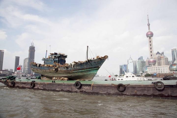 装置作品《九级浪》抵达上海浦东
