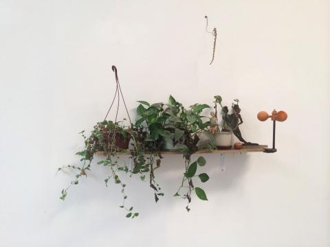 姚薇家的植物和杂物