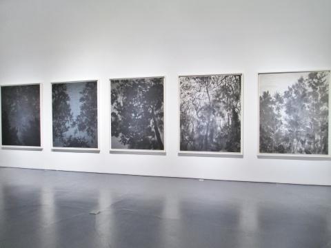 徐加存的作品《树叶的形态》系列