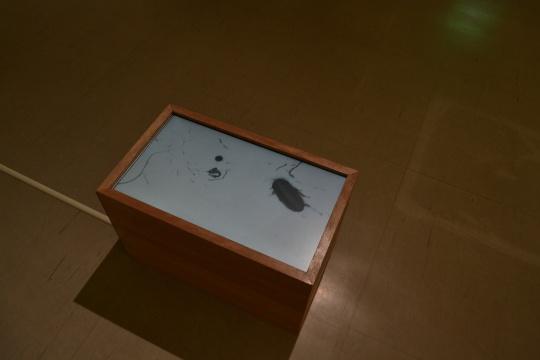 中国艺术家胡晓媛作品《虫写》。(录像)