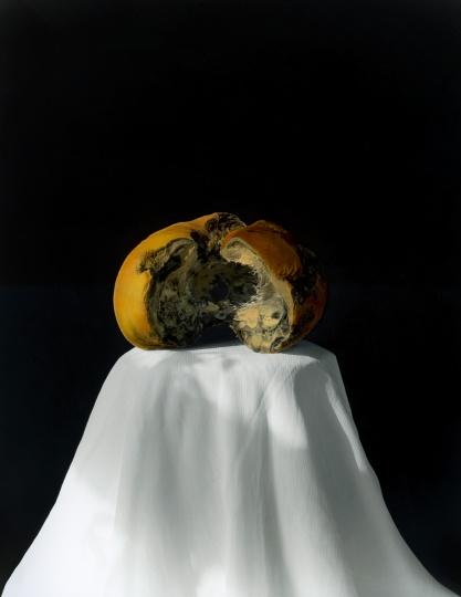 黄磊 《南瓜 2008 (2-2)》 明胶卤化银黑白照片,手工油彩着色 60.5×49.5 cm 2008