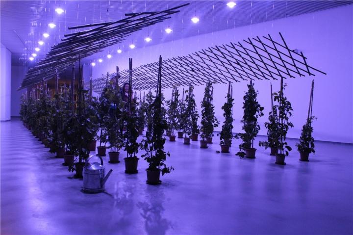 杨沛铿装置作品《百香果路》,竹子和不锈钢作为材料,搭起一座小型建筑,植物本身与建筑编织出某种无法逾越的距离,互不占有又有牵制。