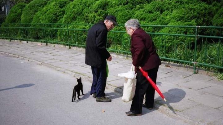 """2007年鲍栋策划,""""鲁迅公园计划文献展"""" 中,鲍栋的摄影《喂猫老人》"""