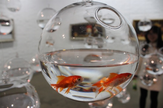 """温京博作品细节,命悬一线的鱼缸,鱼缸之间间距不同,鱼透过鱼缸可见到""""别人""""的世界,每只鱼缸""""家""""都是一个社会小单位"""