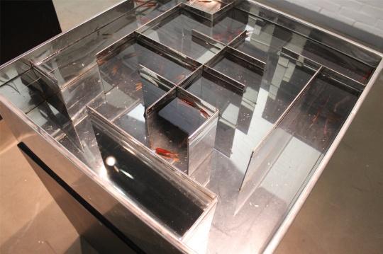 """温京博作品,""""围""""、""""困""""字样的鱼缸,作品曾在中国美术馆展出"""
