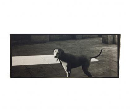 《一只狗在看我 》25.4x10.1cm铂金印相2014