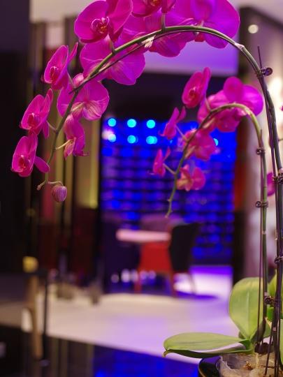 不管色彩使用还是装饰选择,蝶兰餐厅都围绕着《蝶系列》的元素