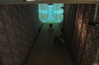 """张卓良公共实证艺术项目在白盒子艺术馆开幕 以物追忆""""受害者""""的历史,张卓良"""