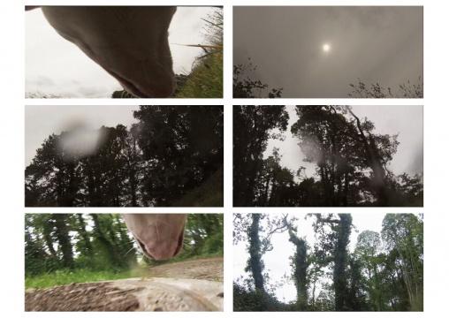 【王功新奖】邓俊峰 《黑森林》 录像 4'14'' 法国欧洲高等艺术学院 2015