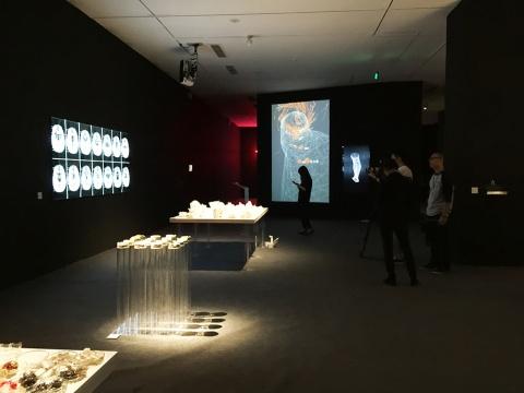 今日美术馆一号馆2层展厅呈现的是40后美国生物艺术家Suzanne Anker的作品