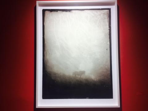 《素歌-N061》《雾中的马#2》火棉胶湿版玻璃底片,收藏级艺术微喷