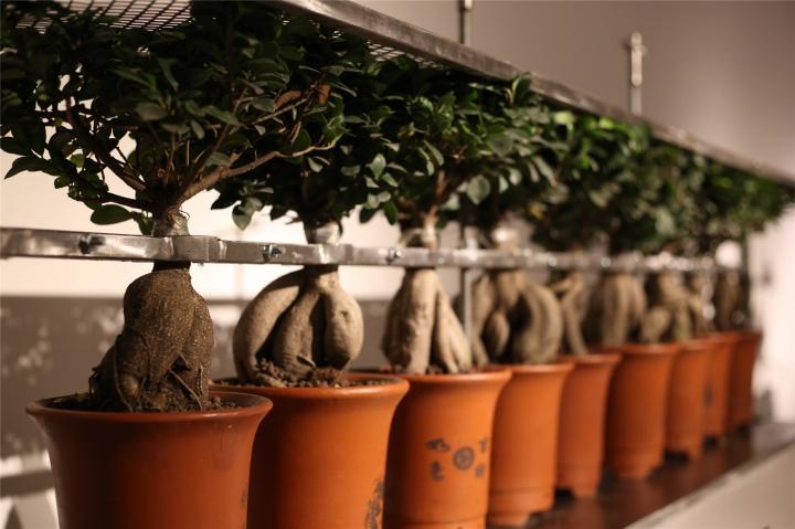 禁锢中生长的小树