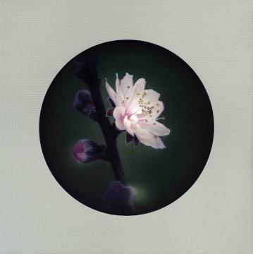 杨勋 《喜上眉梢》 75×75cm 布面油画 2010