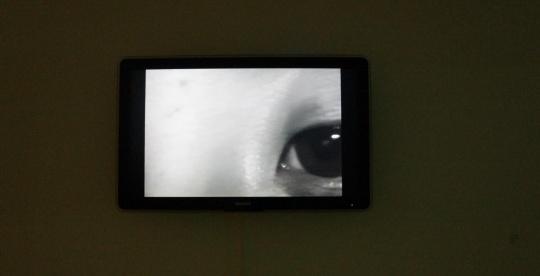 """艺术家通过对自身各个局部的""""扫描"""",完成一幅与传统认知完全悖离的""""自画像""""。"""
