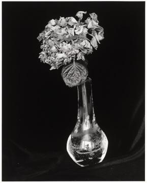 荒木经惟  《爱之花》 42×53cm 银盐打印