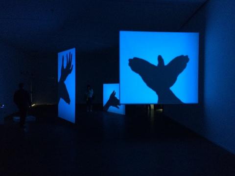 韩国艺术家韩庚佑用真实的动物标本投射出的影子