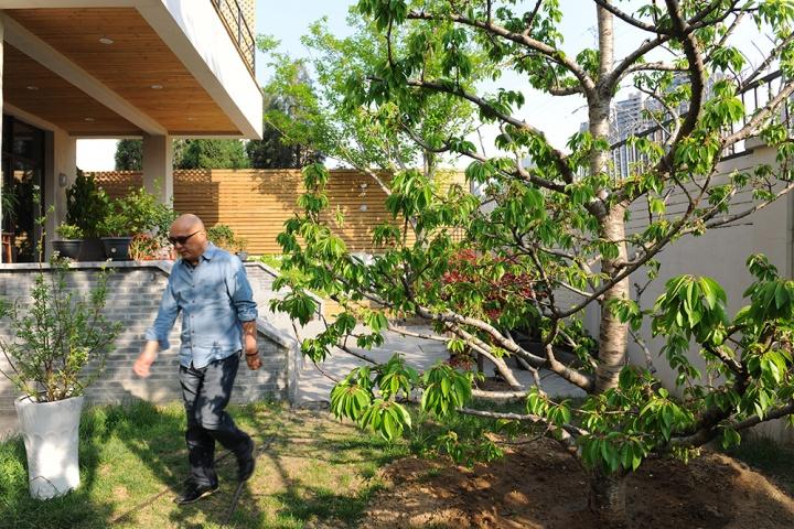 下午的时光,张晓刚从樱桃树下走过。估计到秋天后面的木墙就会长满爬山虎