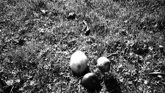 劳拉•普罗沃斯特 《祖母的梦 Grandma's Dream》影像 8分55秒 2013
