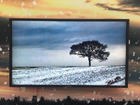 董大为 《孤单的树》 无声,7分12秒 视频 2011