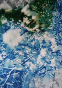 韩磊 《花》 156x110cm 光栅影像 2015