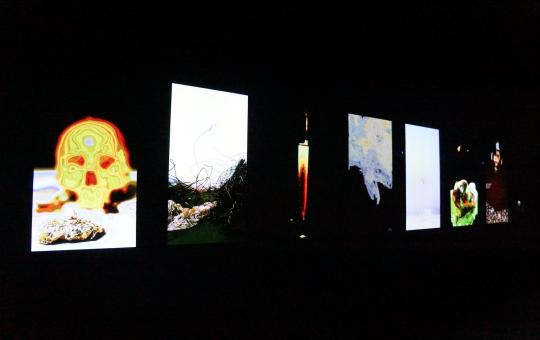 王功新《静物 1-7》 高清视频影像和3D 合成录像装置,无声 2013 由艺术家提供