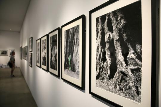 雅克将橄榄树视为天然的雕塑,效仿曾祖父雷诺阿的画作,将模特和橄榄树融入摄影创作。