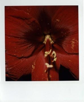 荒木经惟《花》9x10.5cm 拍立得2015