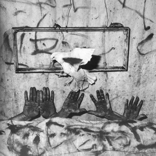 亦安画廊 Roger Ballen,Asylum of the Birds: Five Hands,paper size 90×90cm,image size 75×75cm,archival pigment print,2006 价格:USD 17,000(edition 8 of 10)
