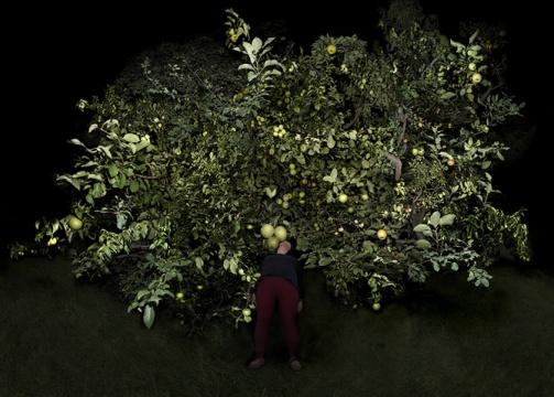 《树 1》,2014-2015,艺术微喷,160×224 cm