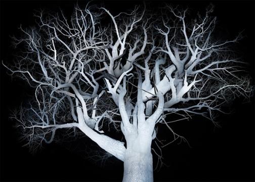 树 2,2014-2015,艺术微喷,160×224 cm,4+2AP