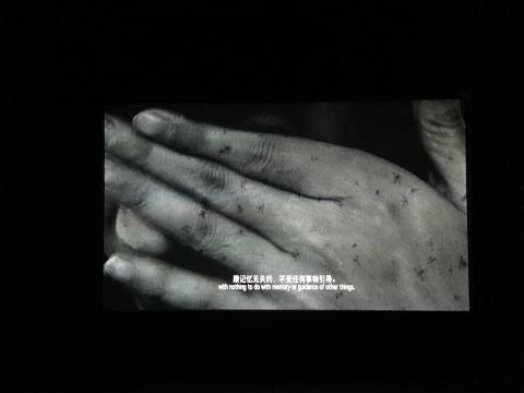 朱昶全 《移植》 5分46秒 单屏高清录像 2015