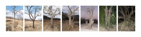 植物时间:从四十岁的梨树到三百岁的梨树