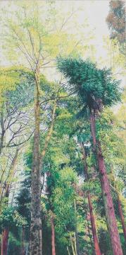 《朝晖》90x180cm布面油画2012