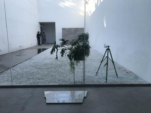 刘亚洲 在杨画廊的庭院抓住午后的阳光