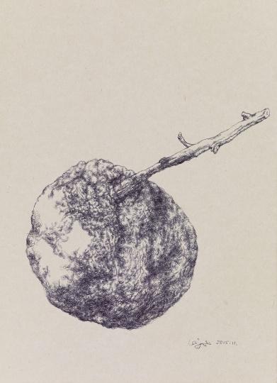 《橘子》 27×20.5cm 纸本圆珠笔 2015