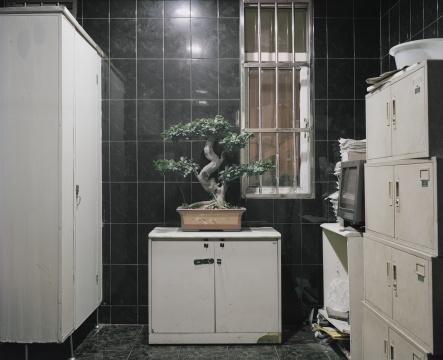 陈晓峰 《植物•置物No.18》 数码微喷 纸张:哈内姆勒 纯艺术 硫化钡(325g)70x90cm2012-2013