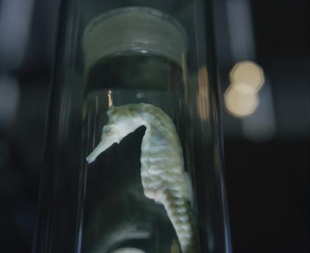 张文心 《死去的海马》 收藏级灯箱装置 80x65cm 2014