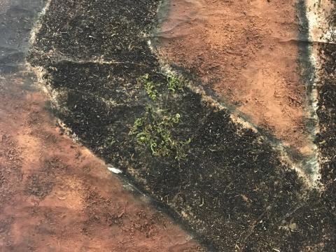 作品细节,可见苔藓在茶叶末上依然生长的鲜活