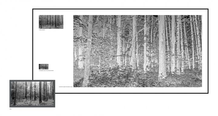 李舜 《森林三》217x105cm 10'2''单频高清录像,收藏级艺术微喷,纸上素描,120黑白底片 2017  RMB:8万元