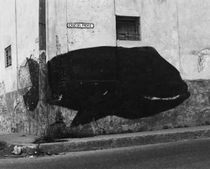"""卡洛斯 · 加莱高亚 《""""动物寓言集""""系列 (鲸)》 200×250cm 布面打印照片 2017  RMB:30万-32万元"""