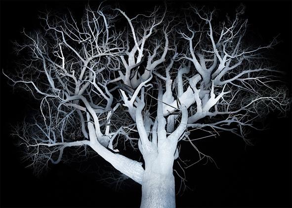 《树 2》160×224cm艺术微喷2014-2015(4+2AP)