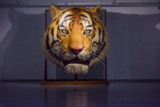 《吼》 350×300×250cm 树脂、硅胶、玻璃、仿真动物皮毛等综合材料 2016-2017