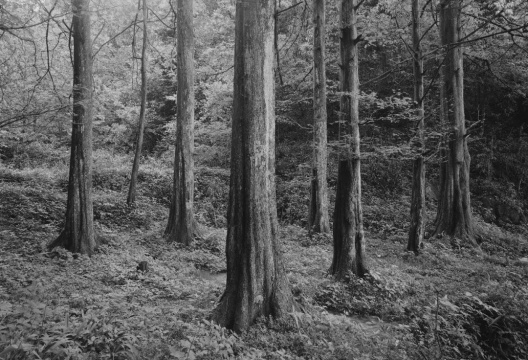《苍之二》110×161cm2/5 摄影 2016  《苍之二》110×161cm2/5 摄影 2016