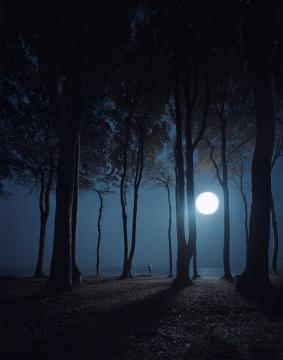 安德里亚斯·穆埃《幽灵森林》226.4×181.4×5.5cm 激光冲印 2015