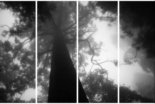 秋麦《影幔 #8B》, 2010,摄影墨本、三桠皮纸,130 x 206 cm