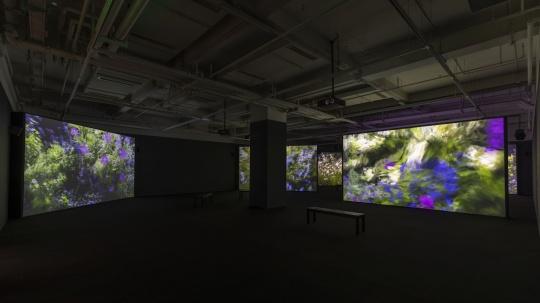 《夏日花园》600×337cm(每屏)7频投影/7声道 系列高清视频 2016