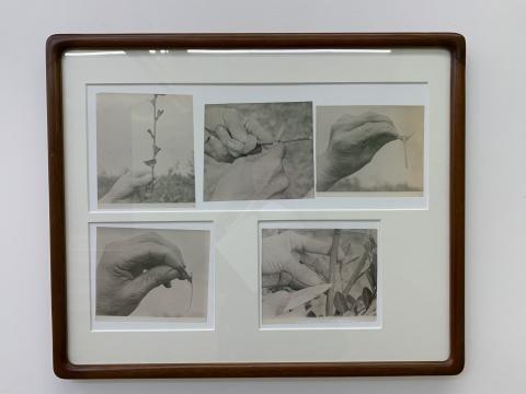 《隐秘之心》 55×67cm 老照片、艺术微喷 2019